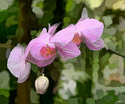 Beautiful Landscape Photos Digital Art - Orchid  by Tom Prendergast