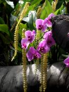 Exquisite And Beautiful Digital Art Prints - Orchidaceous Print by Don  Wright