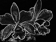 Orchids Digital Art Prints - Orchids - Black and White Abstract Print by Kerri Ligatich