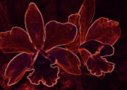 Reds Digital Art Posters - Orchids - For Pele Poster by Kerri Ligatich