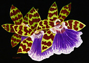 Orchid Paintings - Orchids - Jumping Jacks with Black Background by Kerri Ligatich