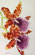 Kerri Ligatich Prints - Orchids - Tiger Stripes  Print by Kerri Ligatich