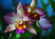 Orchids - Trio Print by Kerri Ligatich