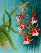 Kerri Ligatich Prints - Orchids - Volcano Queen Print by Kerri Ligatich