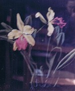 Original For Sale Pastels Prints - Orchids 1 Print by Apollo Neil Casas