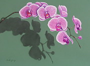 Scratchboard Paintings - Orchids And Shadow by Fay De Jong