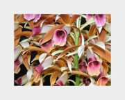 Most Digital Art Metal Prints - Orchids in Bloom Metal Print by Mindy Newman