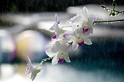 Theresa Willingham - Orchids in the Rain