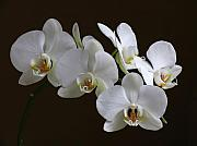 Luminous Acrylic Prints - Orchids Acrylic Print by Juergen Roth