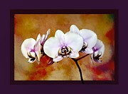 Mary Morawska - Orchids