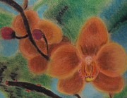 Orchids  Print by M and L Creations