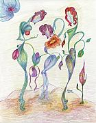 Poppy Drawings Prints - Orchids Print by Mila Ryk