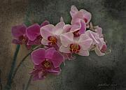 Orchid Photo Prints - Orchids on Canvas Print by Joseph G Holland