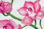 Pink Blossoms Drawings Posters - Orchids Poster by Ramneek Narang