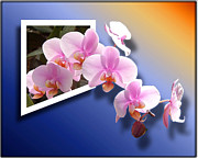 Out Of Bounds Prints - Orchids Through The Pane Print by John Kain