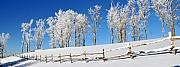 Split Rail Fence Photo Originals - Ore Knob in Snow Panorama by Alan Lenk
