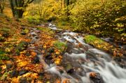 Creek Art - Oregon Autumn Beauty by Mike  Dawson