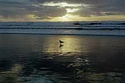 Deahn      Benware - Oregon Coast 3
