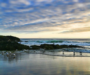 Sea Birds Prints - Oregon Coast at Dusk Print by Bonnie Bruno
