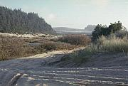 Dunebuggy Prints - Oregon Dunes 5 Print by Eike Kistenmacher