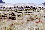 Oregon Dunes 6 Print by Eike Kistenmacher