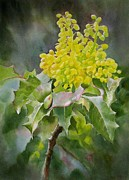 Watercolor Painting Originals - Oregon Grape by Sharon Freeman
