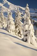 Snow-covered Landscape Photo Prints - Oregon, United States Of America Snow Print by Craig Tuttle
