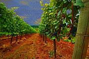 Grapes Digital Art Prints - Oregon Vineyard Print by Jeff Burgess