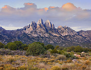 Chihuahua Framed Prints - Organ Mountains Chihuahuan Desert New Framed Print by Tim Fitzharris