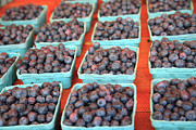 Hamptons Photo Prints - Organic Blackberries Print by Wendy Connett