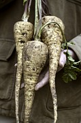 Home Grown Metal Prints - Organic Parsnips Metal Print by Maxine Adcock