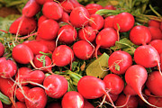 Hamptons Photo Prints - Organic Radishes Print by Wendy Connett