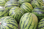 Large Metal Prints - Organic Watermelon Metal Print by Wendy Connett