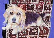 Dog Portrait Pastels - Oriental Toy by Pat Saunders-White