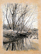 River Scenes Drawings - ORIGINAL Bare Branch Reflections by Michael Story