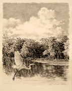 River Scenes Drawings - ORIGINAL Congaree River Flight by Michael Story