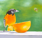 Oriole Drawings Framed Prints - Oriole and the Orange Framed Print by Faythe Mills