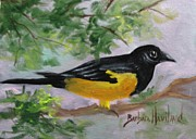 Oriole Originals - Oriole Bird by Barbara Haviland