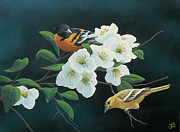 Tree Blossoms Originals - Orioles by Mark Mittlesteadt