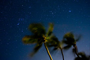 Stars Photos - Orion and Windswept Palms by Adam Pender