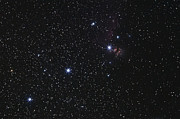 Orion Photos - Orions Belt, Horsehead Nebula And Flame by Luis Argerich