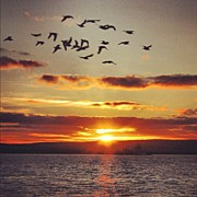 Birds Art - Orkkneys sunset by Luisa Azzolini