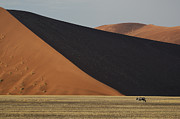 Gemsbok (oryx Gazella) Photos - Oryx and Dunes by Christian Heeb