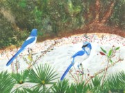 Scrub Jay Paintings - Oscar and Scherer by William Demboski