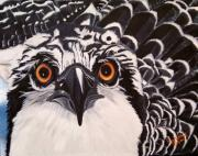 Raptor Paintings - Osprey Eyes  by Debbie LaFrance