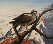 Eagle Painting Framed Prints - Osprey Lost Framed Print by Karen Musick