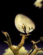 Moonlit Night Photos - Osprey Moon by Mal Bray