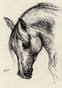 Stallion Drawings - Ostragon by Angel  Tarantella