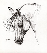 Horses Drawings Metal Prints - Ostragon polish arabian horse 1 Metal Print by Angel  Tarantella