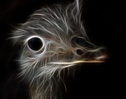 Ostrich Photos - Ostrich Fractalius by Maggy Marsh